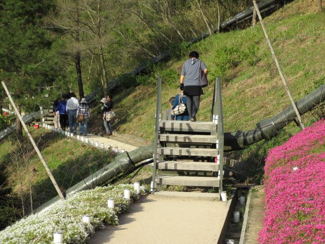 芝桜の小道(昼)20