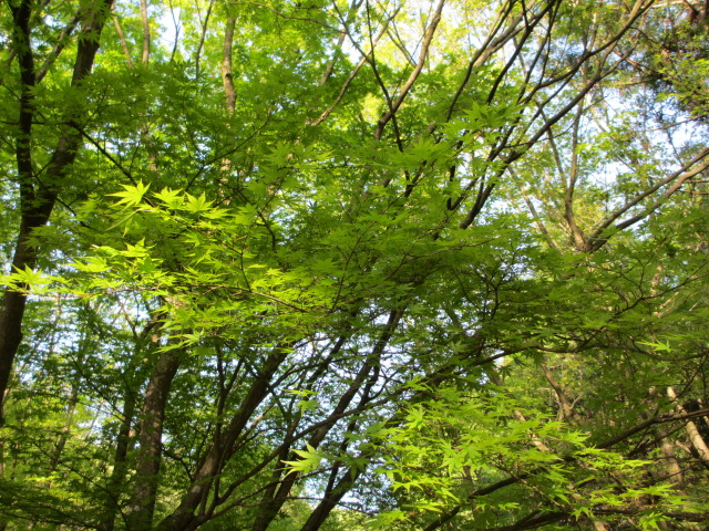 芝桜の小道(昼)25
