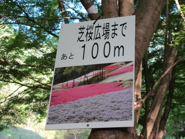 芝桜の小道(昼)30
