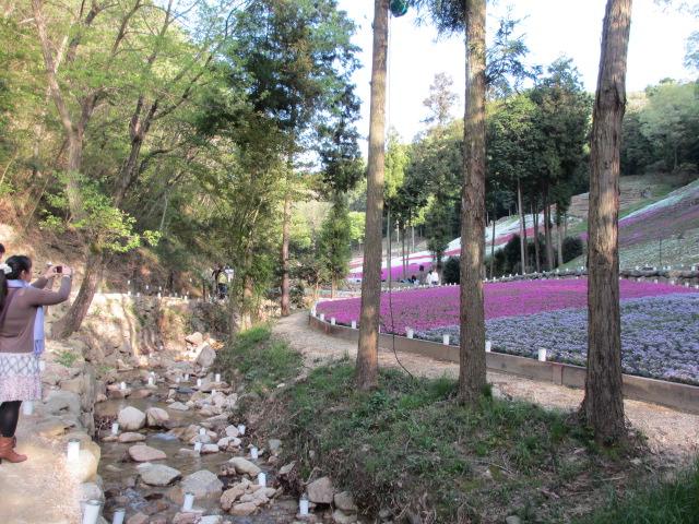 芝桜の小道(昼)31
