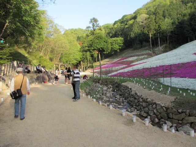 芝桜の小道(昼)35