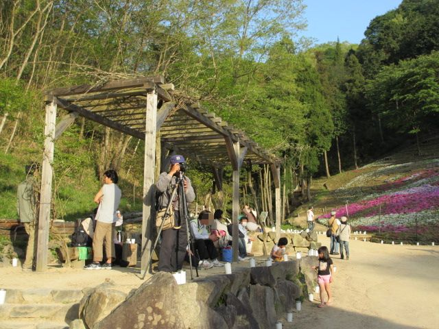芝桜の小道(昼)36