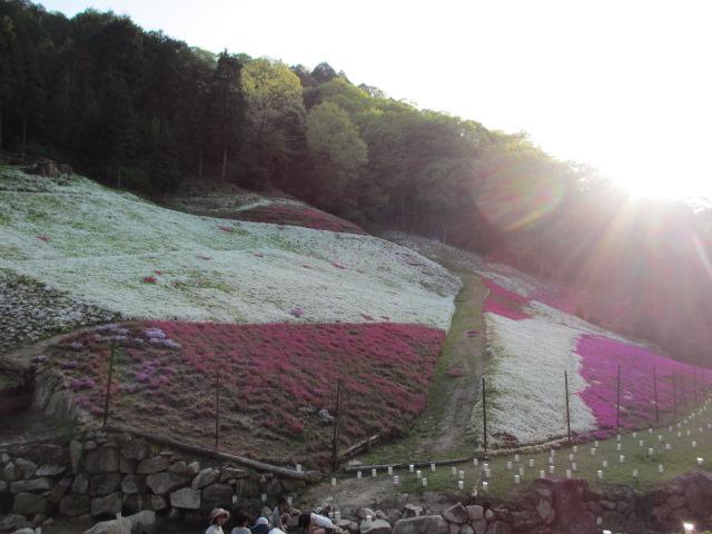 芝桜の小道(昼)40