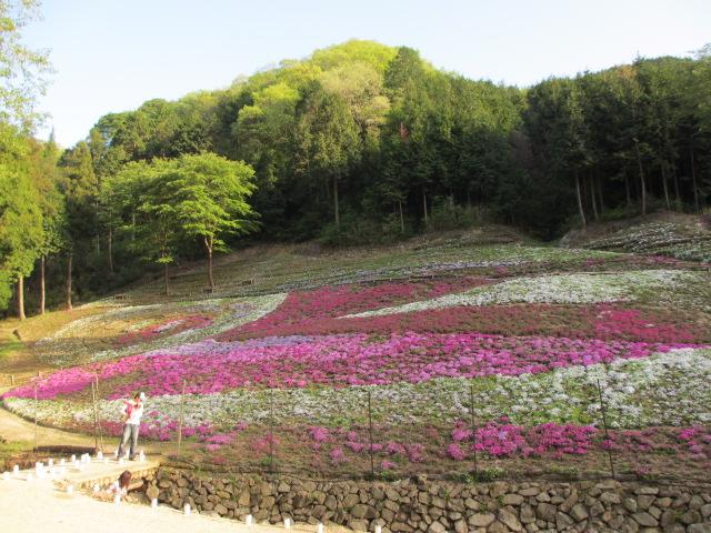 芝桜の小道(昼)38