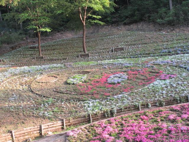 芝桜の小道(昼)39