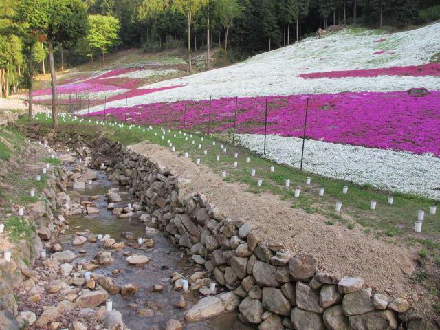 芝桜の小道(昼)37