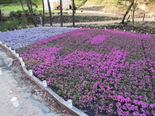 芝桜の小道(昼)44