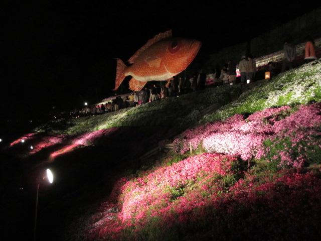 芝桜の小道(夜)5