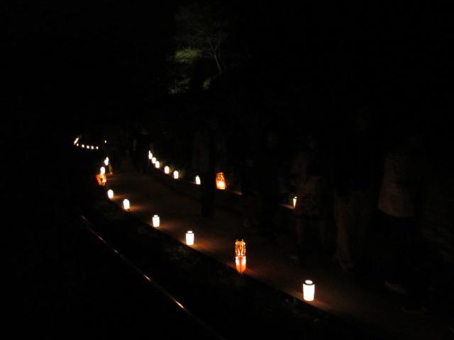 芝桜の小道(夜)11