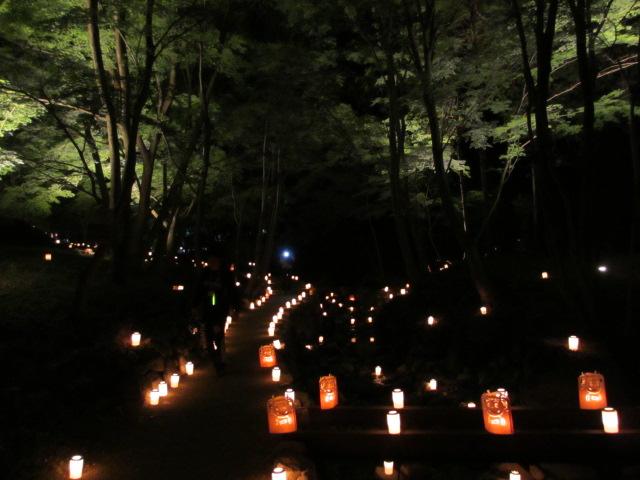 芝桜の小道(夜)15