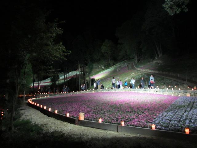 芝桜の小道(夜)19