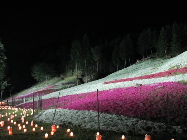 芝桜の小道(夜)22