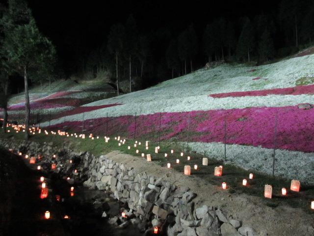 芝桜の小道(夜)23