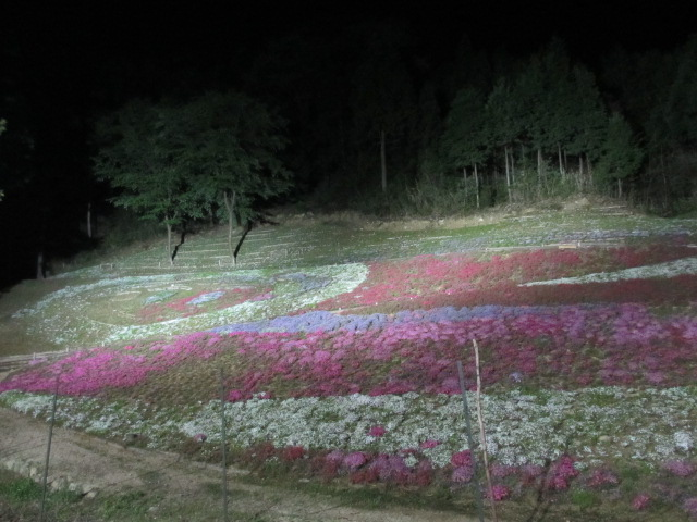 芝桜の小道(夜)24