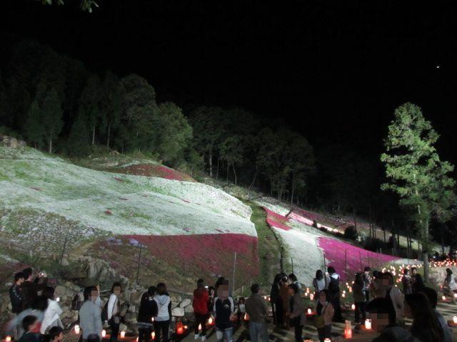 芝桜の小道(夜)25