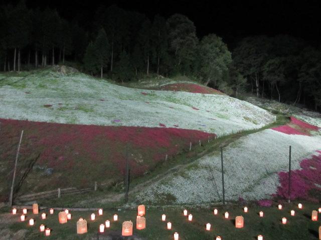 芝桜の小道(夜)26