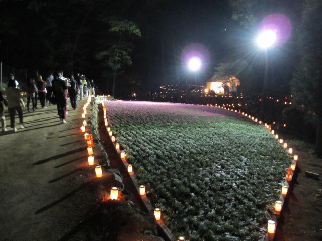 芝桜の小道(夜)27