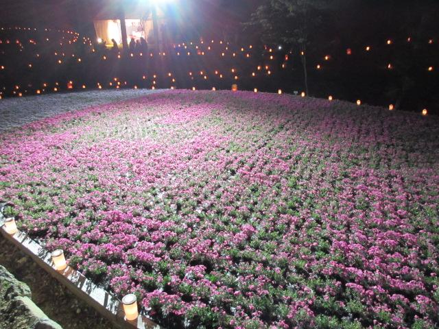 芝桜の小道(夜)28