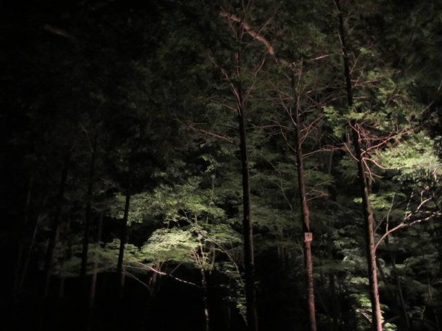 芝桜の小道(夜)29