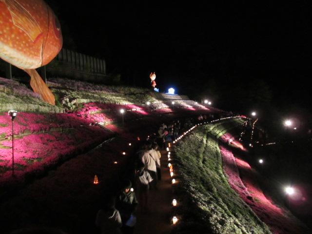 芝桜の小道(夜)30