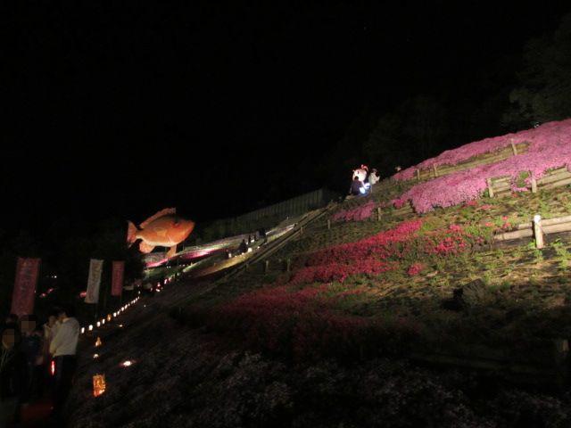 芝桜の小道(夜)4
