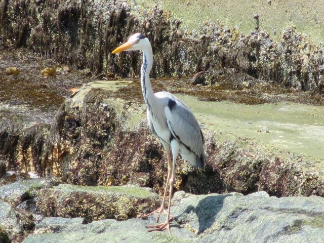 片名漁港の鳥
