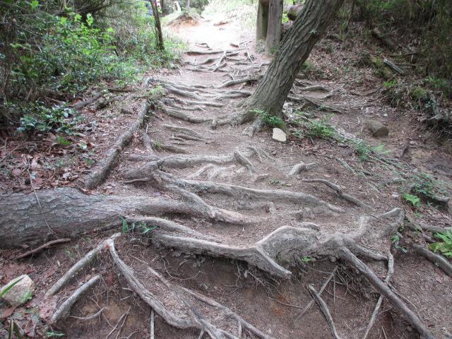 六甲山2012春(その2 風吹岩 ~最高峰編) 雨ケ峠まで4
