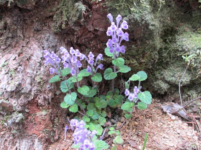 六甲山2012春(その2 風吹岩 ~最高峰編) 雨ケ峠まで5