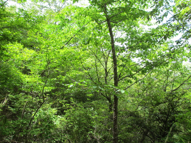 六甲山2012春(その2 風吹岩 ~最高峰編) 雨ケ峠まで9