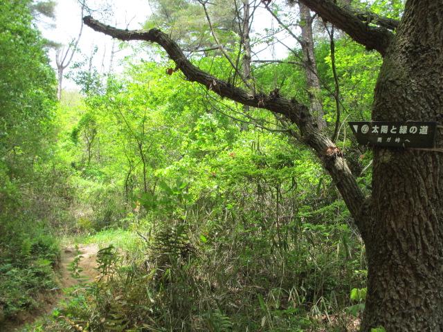 六甲山2012春(その2 風吹岩 ~最高峰編) 雨ケ峠まで19