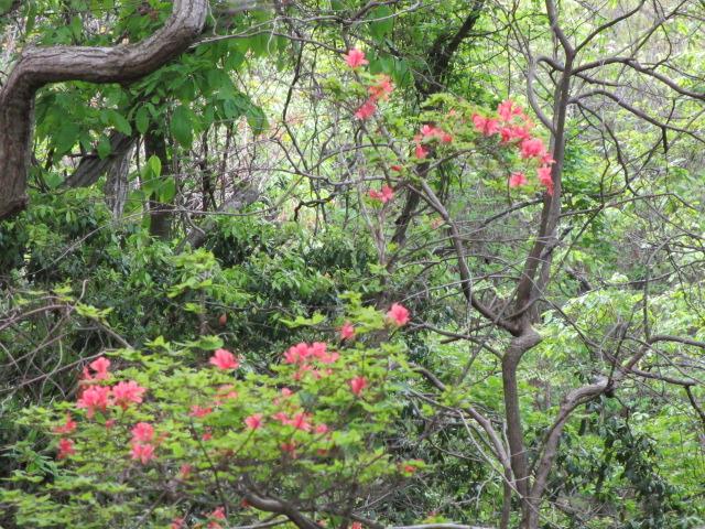 六甲山2012春(その2 風吹岩 ~最高峰編) 雨ケ峠まで21