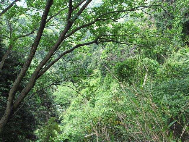 六甲山2012春(その2 風吹岩 ~最高峰編) 雨ケ峠まで22