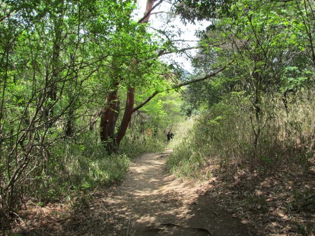 六甲山2012春(その2 風吹岩 ~最高峰編) 本庄橋跡・七曲り分岐点まで2