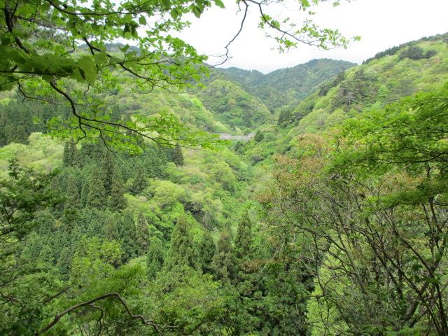 六甲山2012春(その2 風吹岩 ~最高峰編) 本庄橋跡・七曲り分岐点まで4