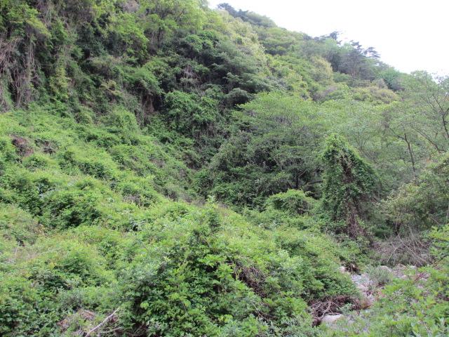 六甲山2012春(その2 風吹岩 ~最高峰編) 一軒茶屋まで2