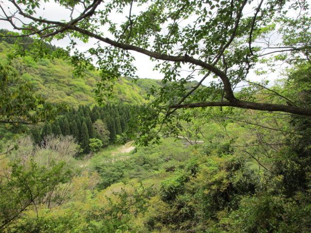 六甲山2012春(その2 風吹岩 ~最高峰編) 一軒茶屋まで11