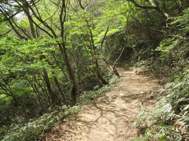 六甲山2012春(その2 風吹岩 ~最高峰編) 一軒茶屋まで13