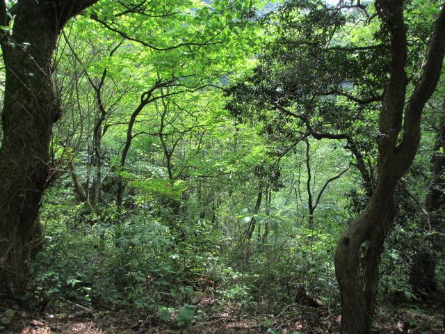 六甲山2012春(その3 最高峰~有馬温泉編) 有馬稲荷神社近道まで14