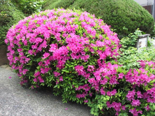 六甲山2012春(その3 最高峰~有馬温泉編) 有馬温泉街