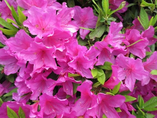 六甲山2012春(その3 最高峰~有馬温泉編) 有馬温泉街2
