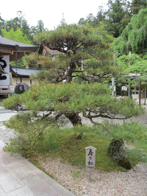 熊野本宮大社 拝殿3