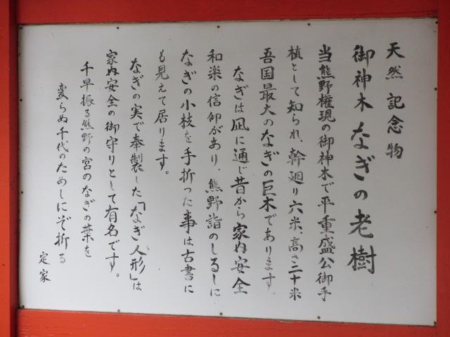 熊野速玉大社 梛の大樹2