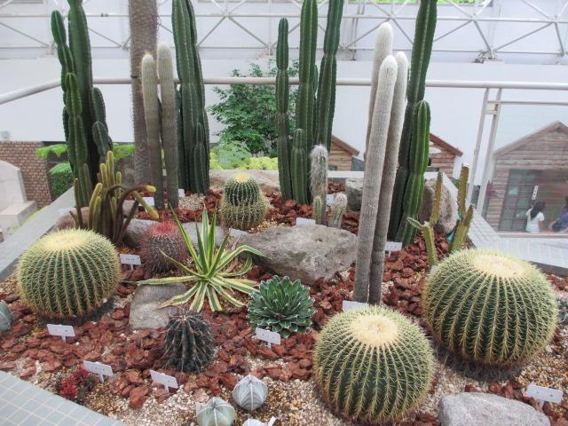 都市緑化植物園(グリーンピア春日井)5