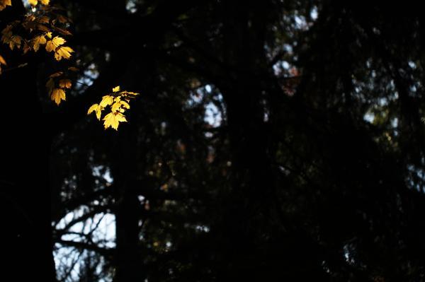 131201黄色い葉2_convert_20131228223957