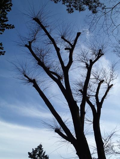 14冬の木2_convert_20140111200706