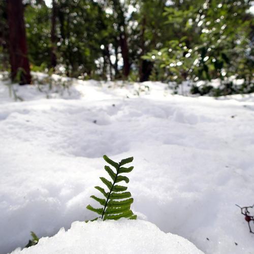 1402雪翌日2_convert_20140209114606