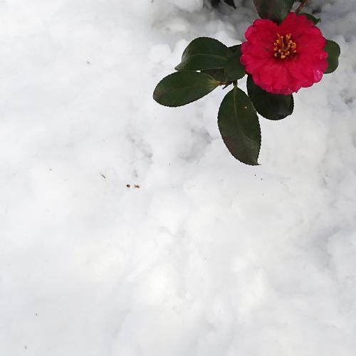 1402雪翌日3_convert_20140209114623