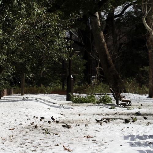 1402雪の鳥1_convert_20140210225133