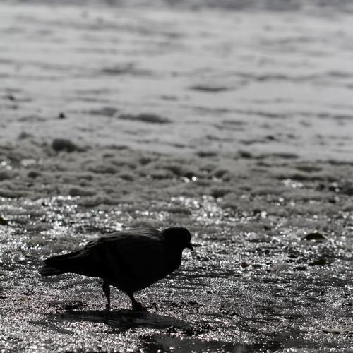 1402雪の鳥2_convert_20140210225156