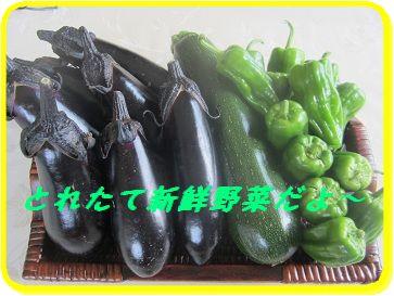 623 野菜 ブログ